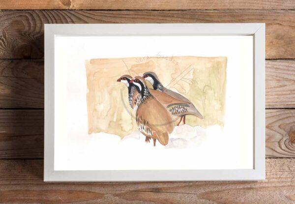 Red Partridges Print